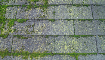 Removing Moss from Your Roof